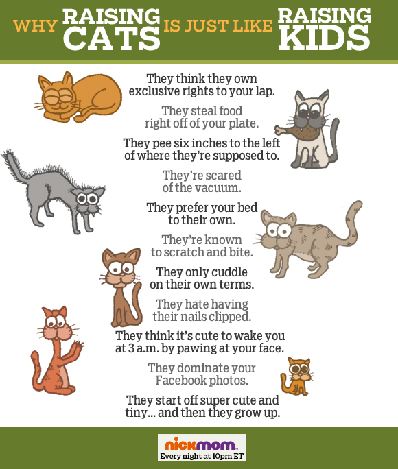 25-raising-cats-like-raising-kids-article